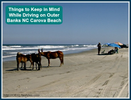 OBREC Carova Beach things to keep in mind - wild horses